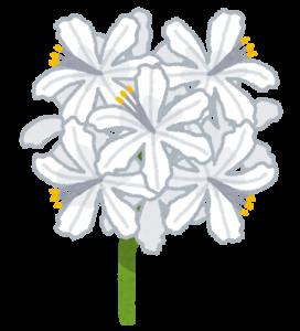 flower_diamond_lily